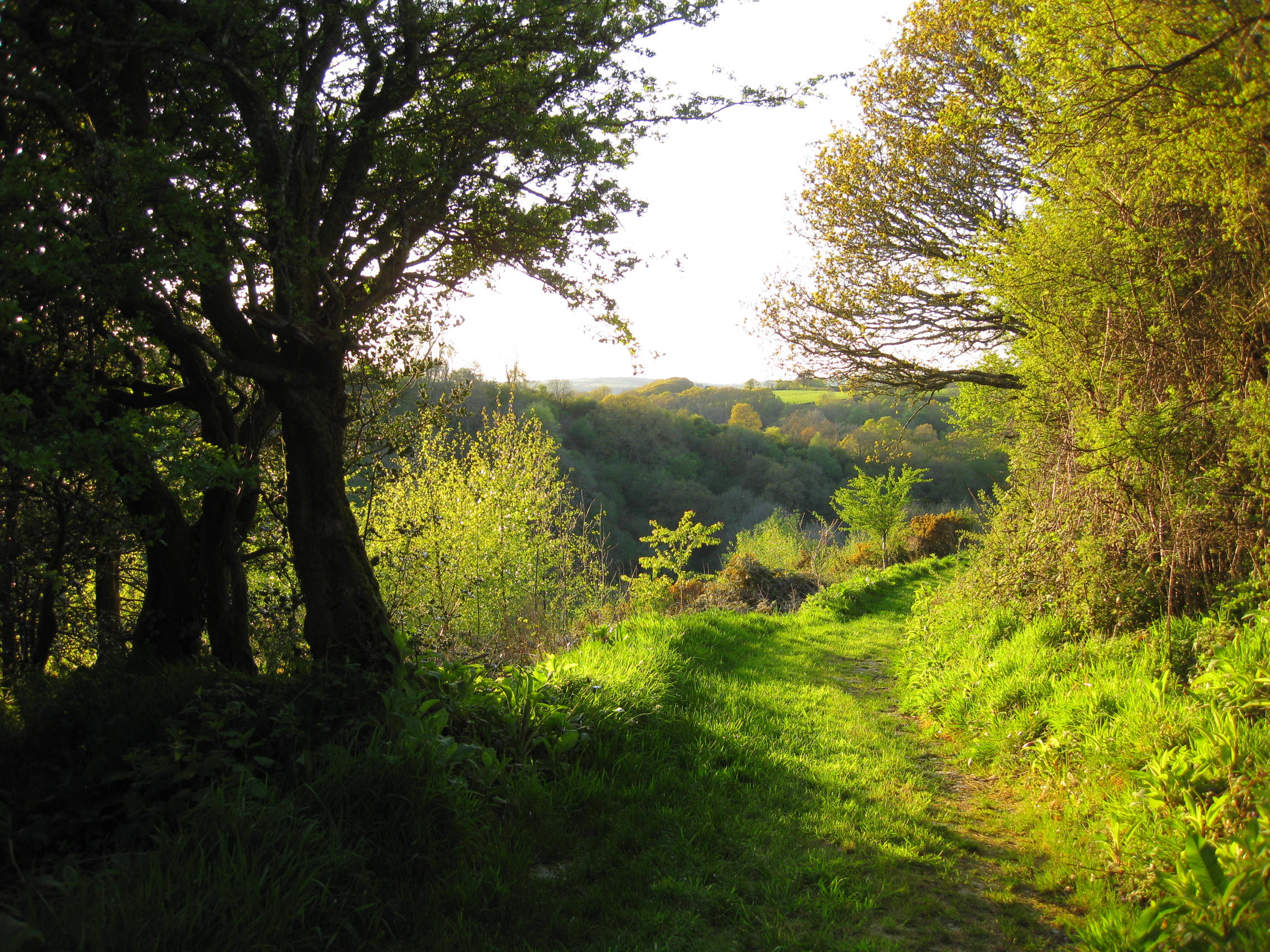 Hedgerow and track leading to the wagon