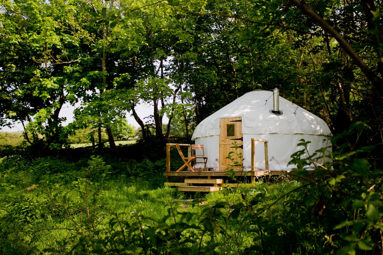 wild garlic Yurt