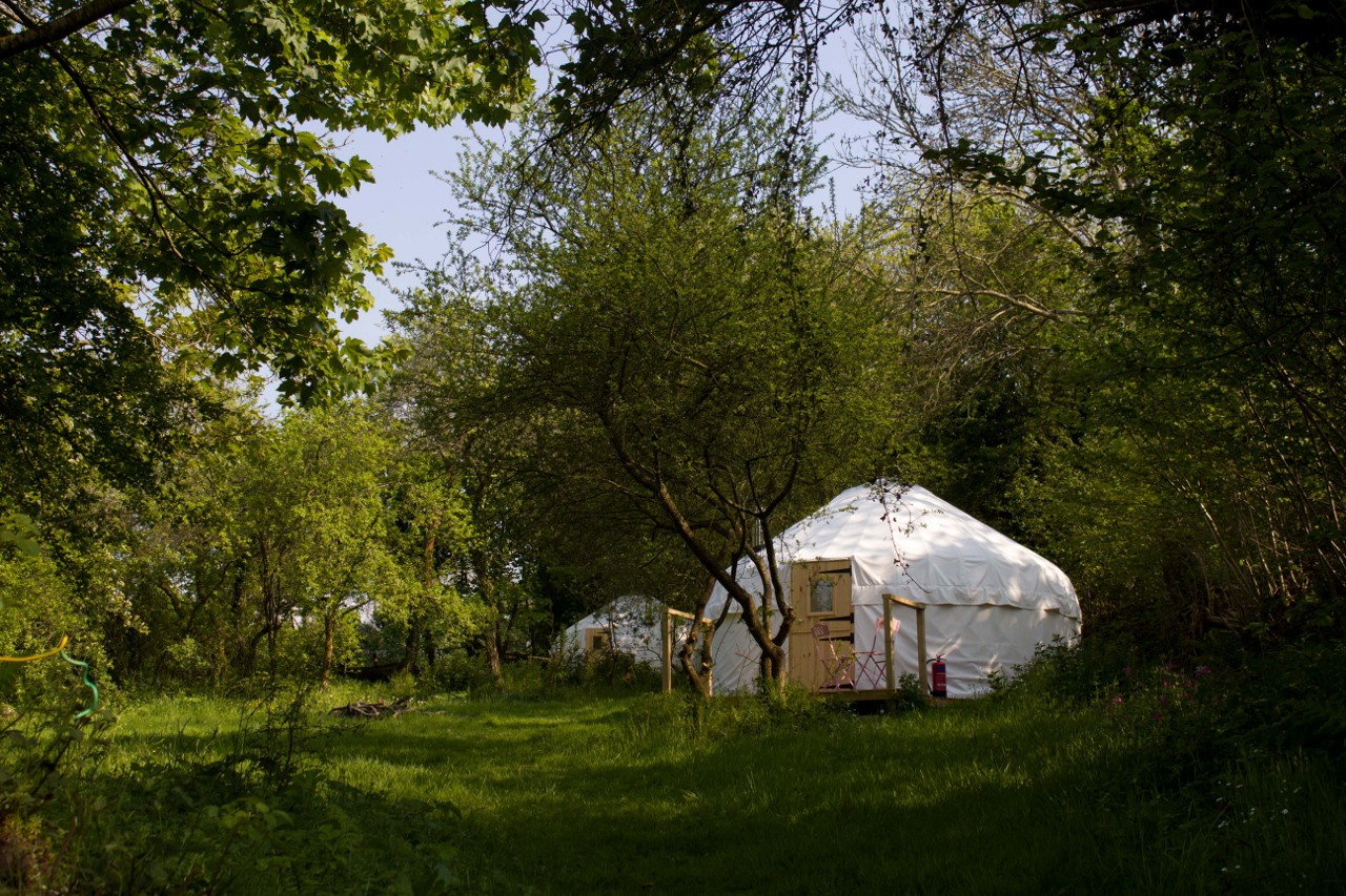 damson and wild garlic yurts