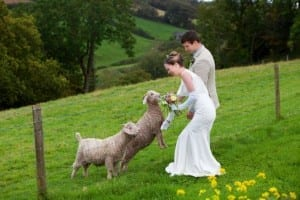 Bride & Groom stroking goats