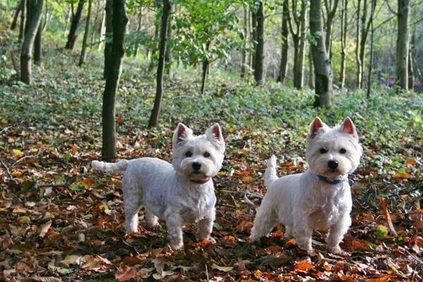 Dog-Friendly Publicity for Ceridwen in ' Essential Surrey Magazine'